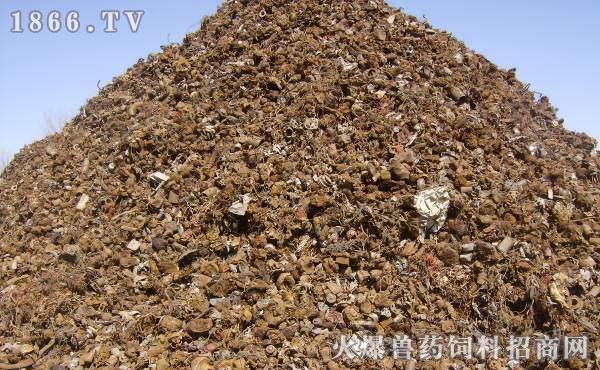 双孢菇种植大棚图片 养牛大县巧治污 牛粪种植双孢菇(图)