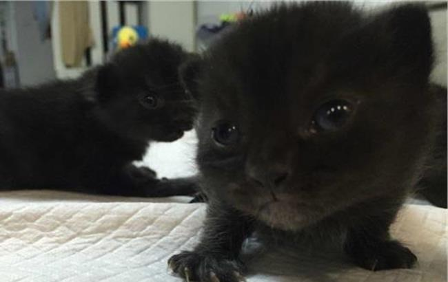 猫挑食不吃猫粮吃的少图片