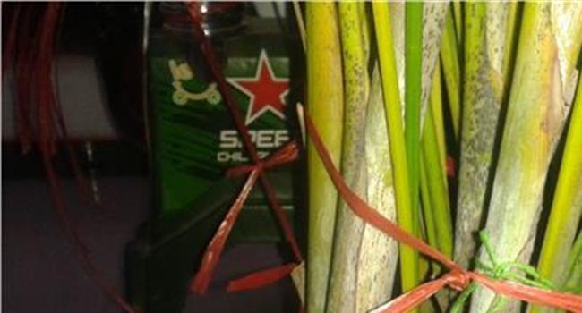 富贵椰子叶子发黄怎么救图片